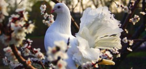 в Уфе  пройдет 3 Международный конкурс «Голубь Весны - UFA»